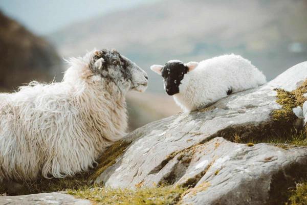 Fotografie: Sheeps Rock 100x70